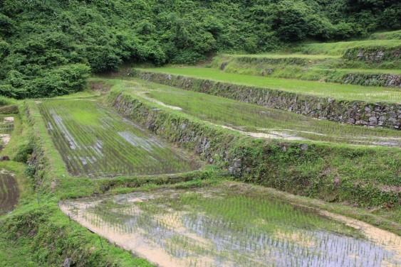 石垣の棚田