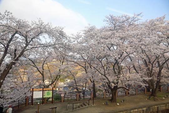勝沼ぶどう郷駅の桜