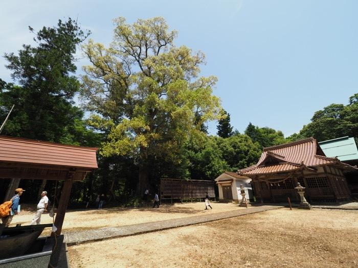 三渡八幡宮