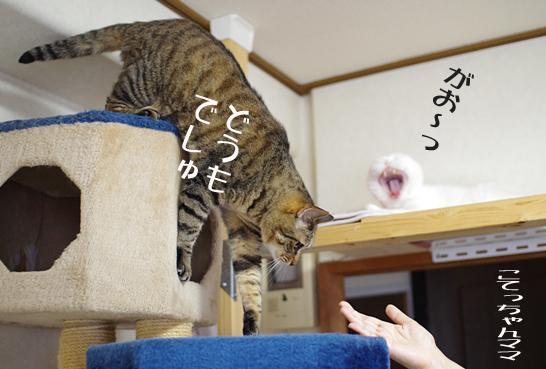 すぐ降りてくる¥あs^¥d-^あsd^-あだdのコピー