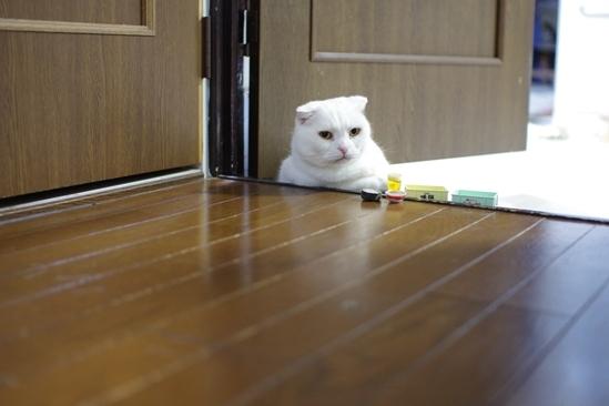 猫部屋にいると^s^あsだs