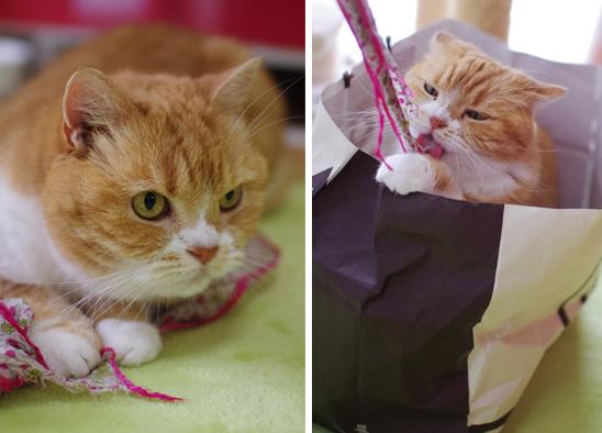 猫部屋でラブラブ&可愛い猫グッズ
