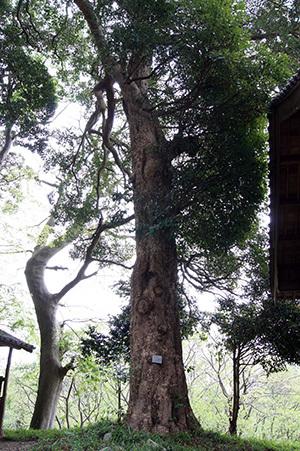180423鹿島神社のタブ