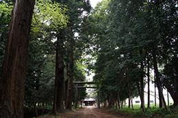 180423鹿島神社ケヤキ