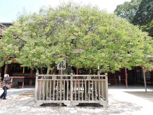 180802dazaifu81.jpg