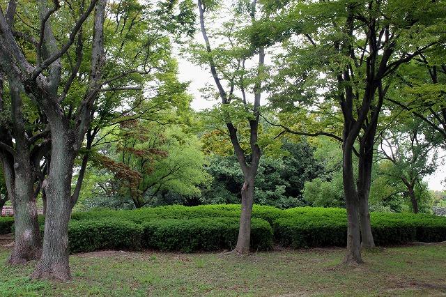 ⑦大仙公園