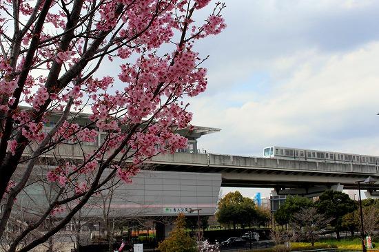 ⑨舎人公園桜
