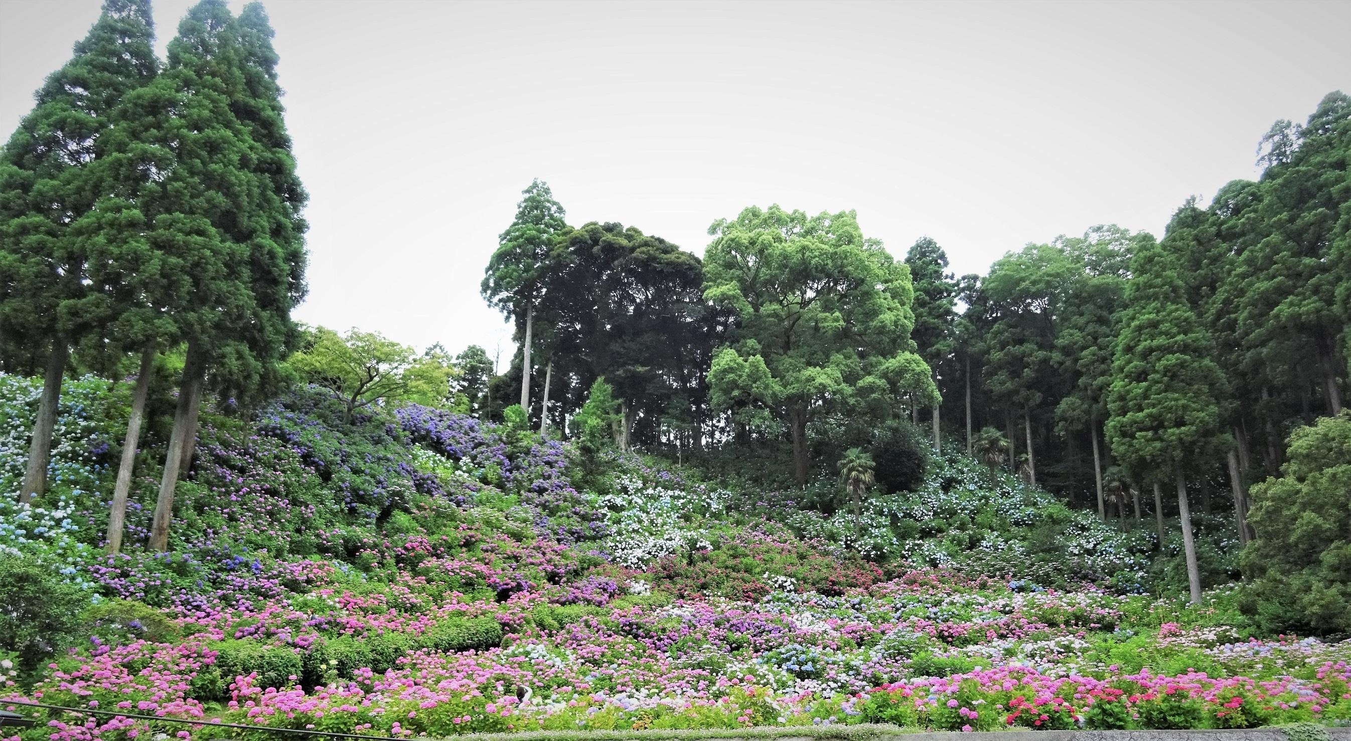 ●紫陽花屋敷①