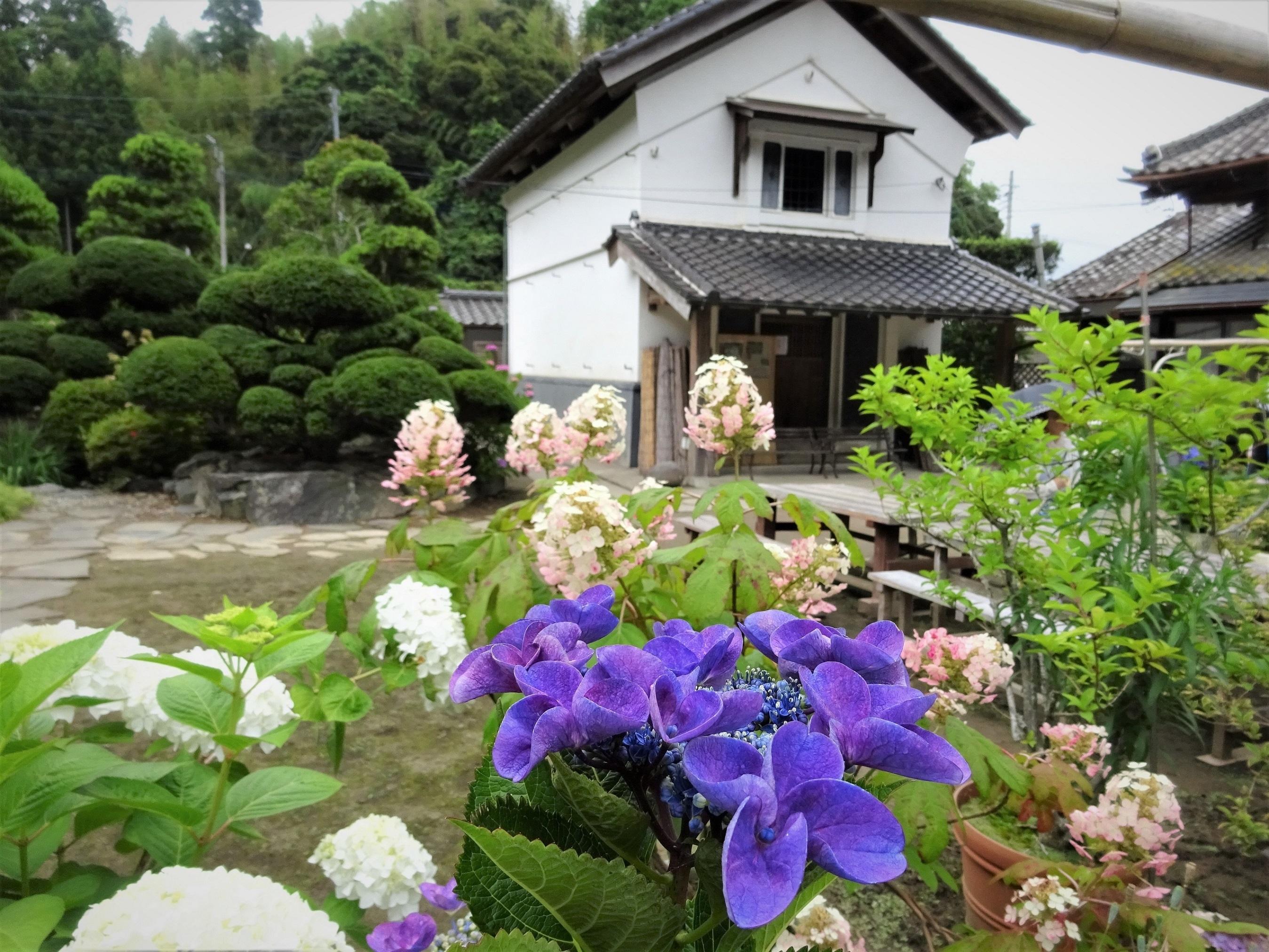 ●紫陽花屋敷②
