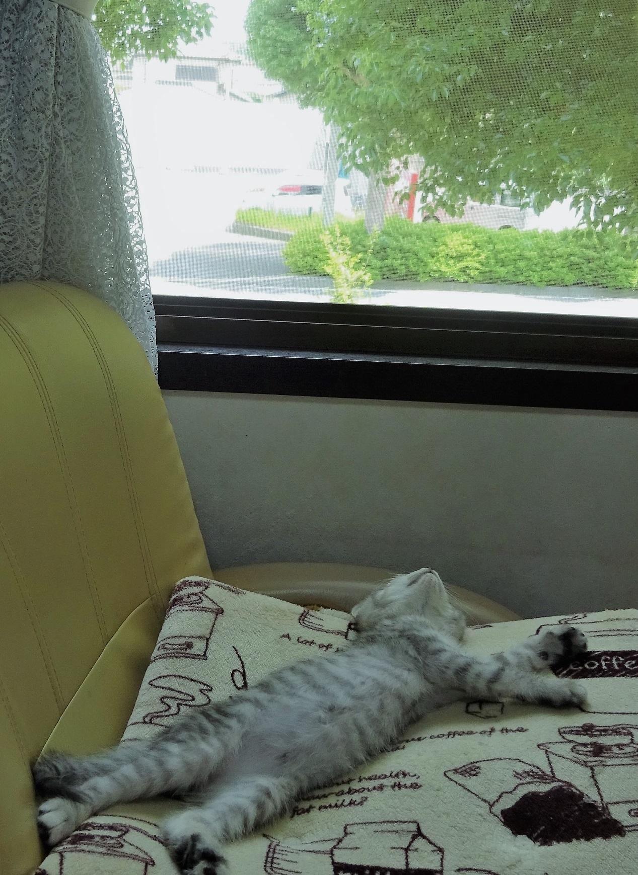 ●お昼寝①