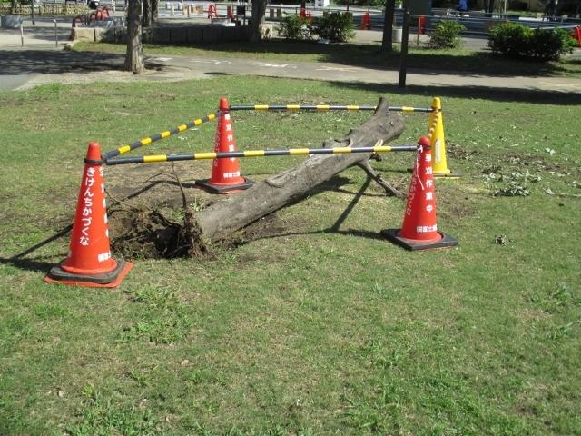 坊主にされた倒木