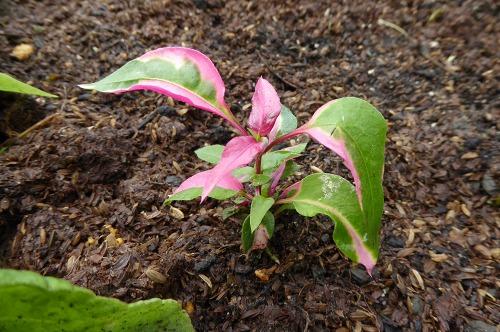 花壇リメイク