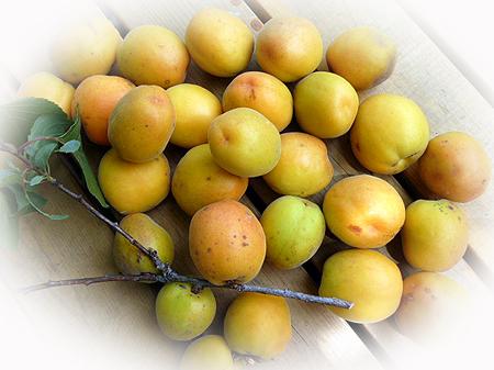 69杏収穫第一弾