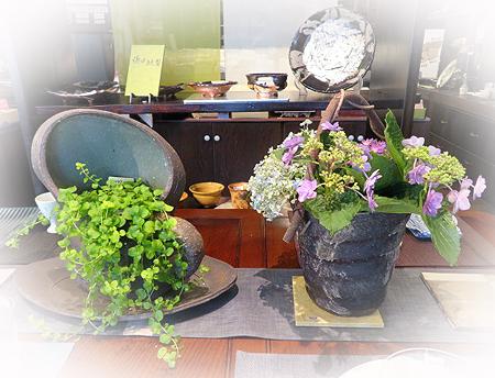 704緑&紫陽花