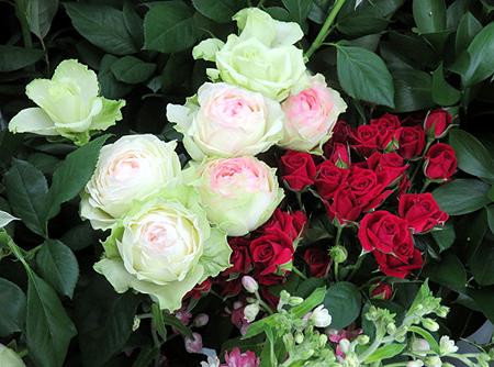 807薔薇