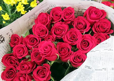807薔薇1
