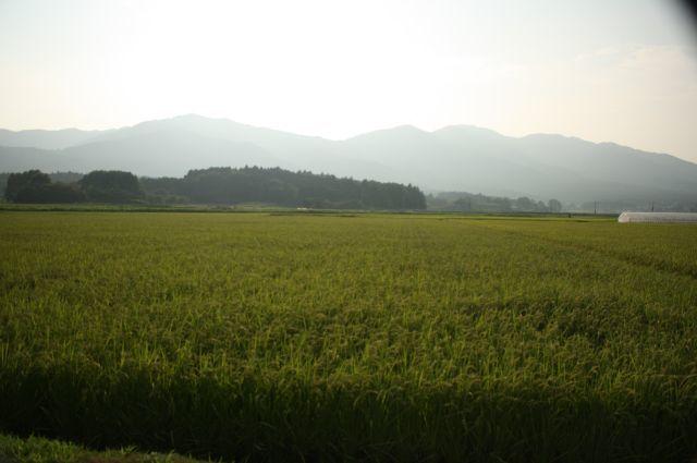 茨城の自然 田んぼ