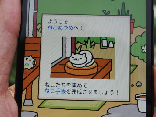 20180609・ミニ散歩にゃ~にゃ~13
