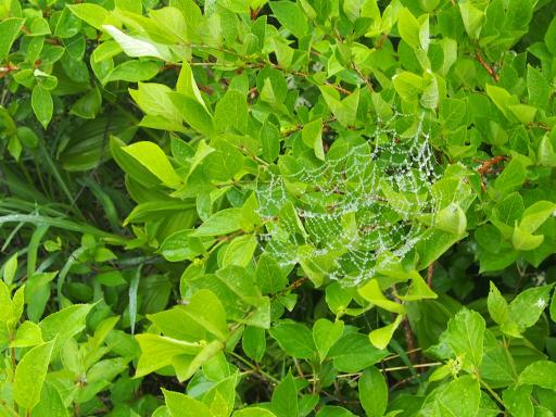 20180616・磐梯旅行記1-22・蜘蛛の巣