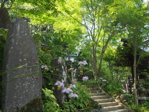 20180805・御岳山2-16