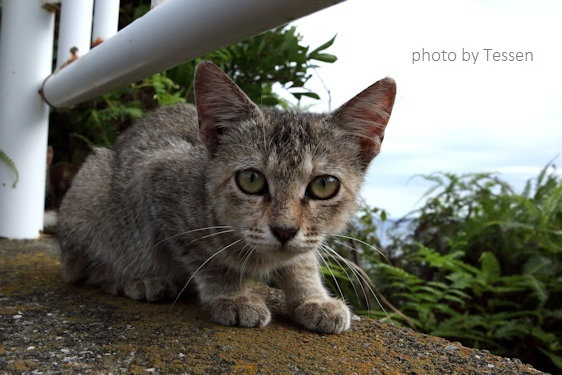 IMG_8366子猫