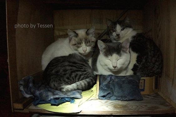 16179499_猫の家