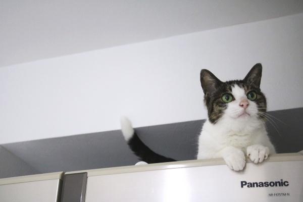 猫は上にいる