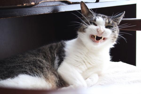 基本的猫ブログの作り方