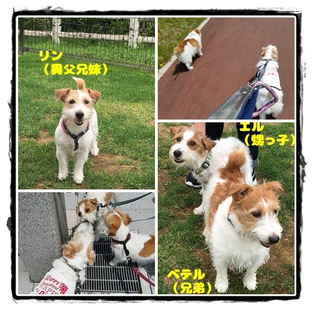 catsuhihiy6tf.jpg