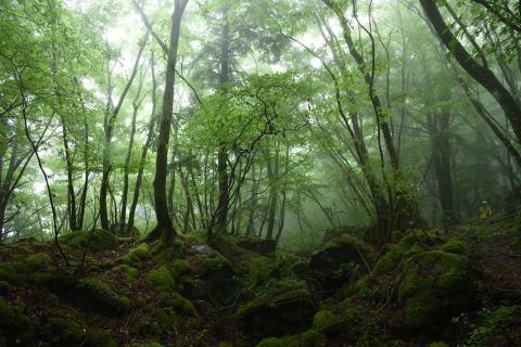 幻想の森①
