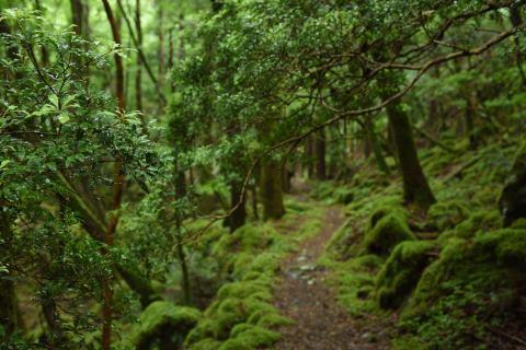 幻想の森②