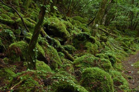 幻想の森③
