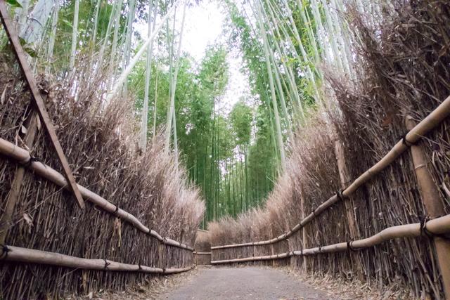 嵐山(1)