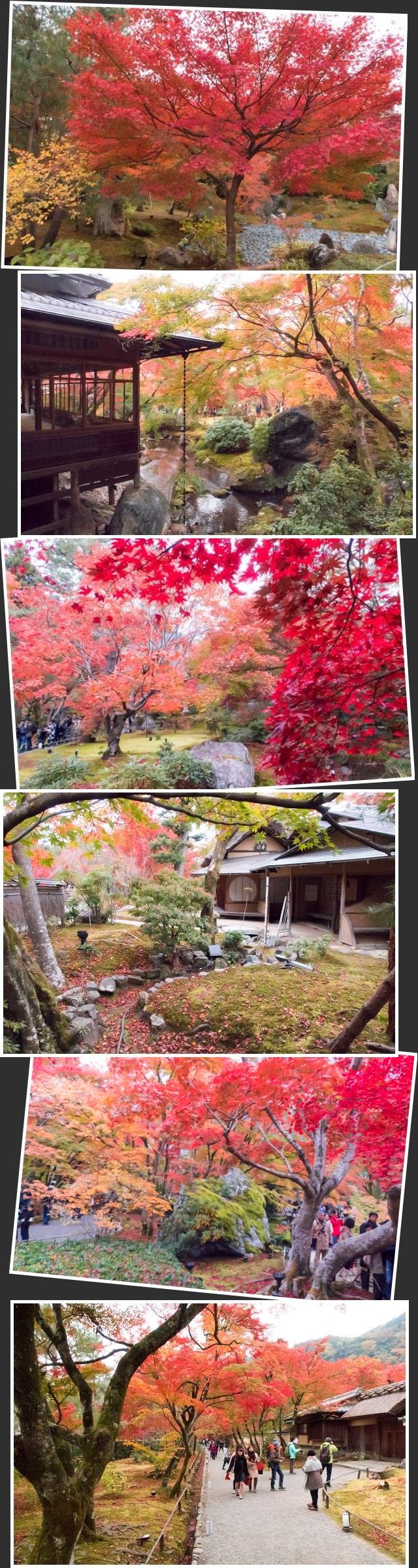 嵐山(18)