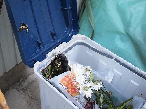 500蝶とさなぎとゴミ箱3