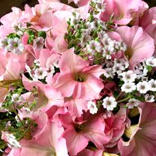 お花いっぱいです♪