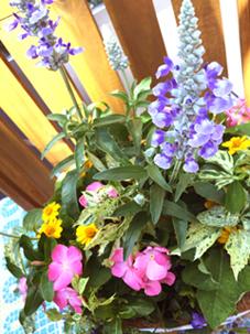 鮮やかな夏色の寄せ植え