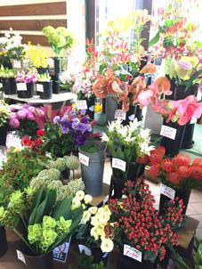 切花コーナーお花いっぱい