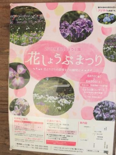 1花しょうぶまつり0608