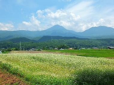 3蕎麦の花と八ヶ岳0725