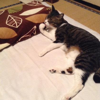 枕ポジション1