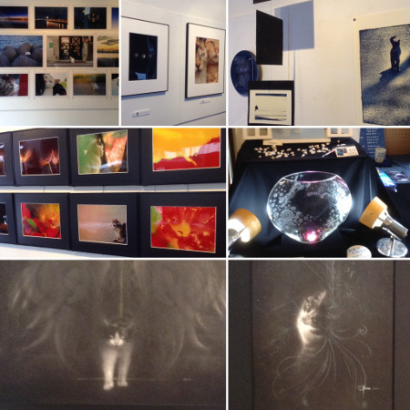 Gallery PawPad