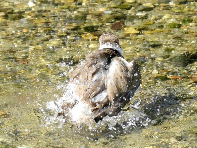 水浴び01 (12)