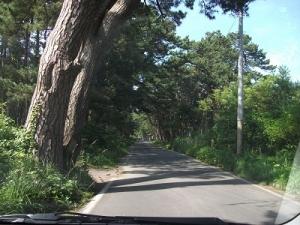 180726松林入ります
