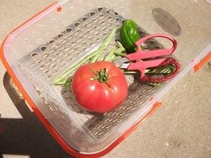 180730トマト初収穫
