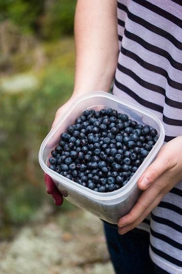 Blueberry01.jpg
