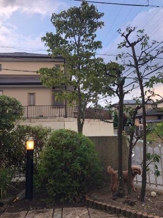 uekiya35.jpg