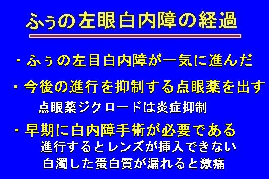 006aMG_4808.jpg