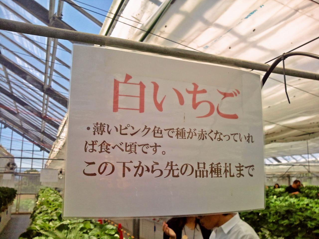 かたのいちご園(食べ放題)