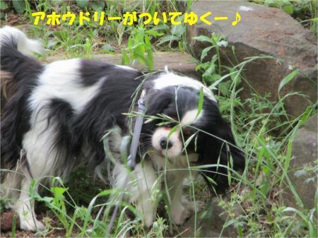 09_convert_20180515193214.jpg